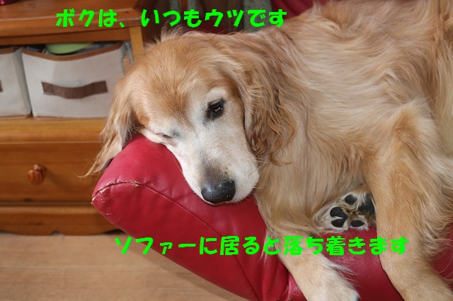 IMG_5579_2017030315392033d.jpg