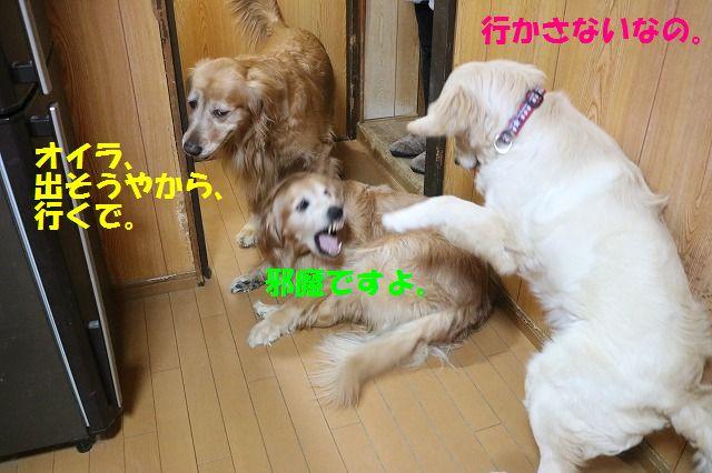 IMG_6001_20170313234418b3e.jpg
