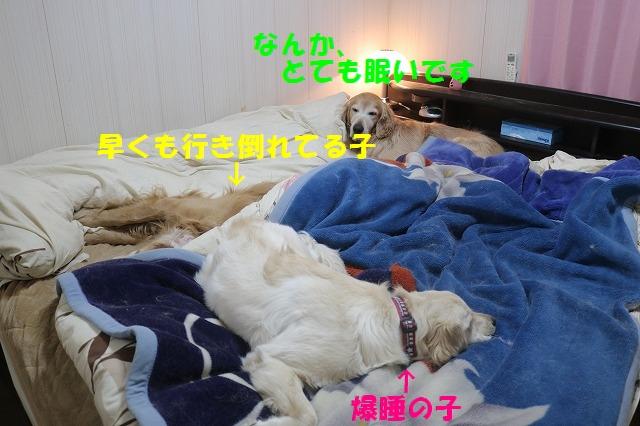 IMG_6557_20170322223504628.jpg