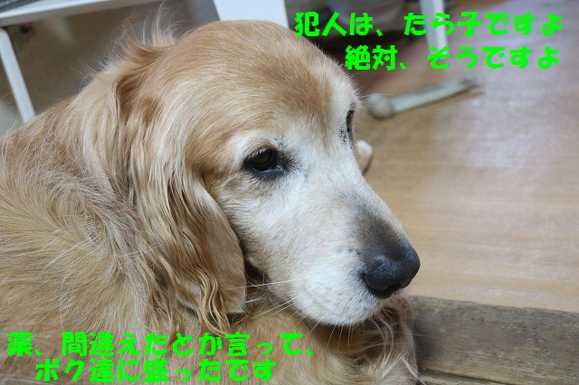 IMG_6582.jpg