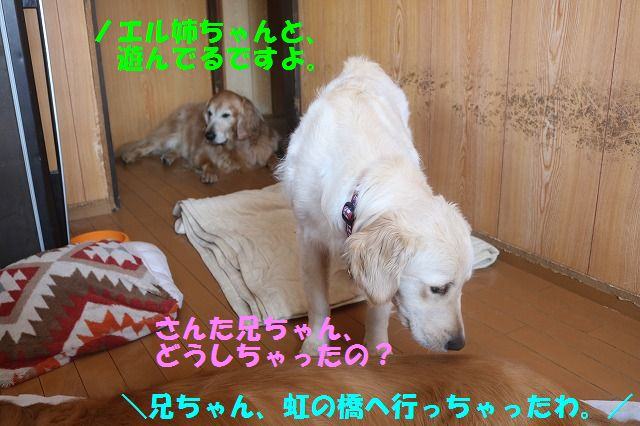 IMG_7008.jpg