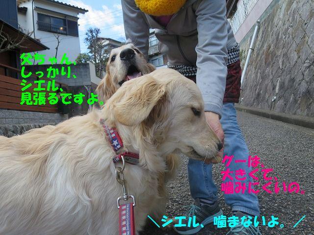 IMG_9562_20170225203403288.jpg