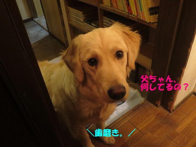 IMG_9698.jpg