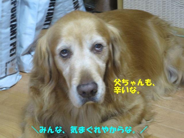 IMG_9854.jpg