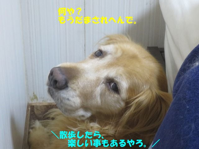 IMG_9922.jpg