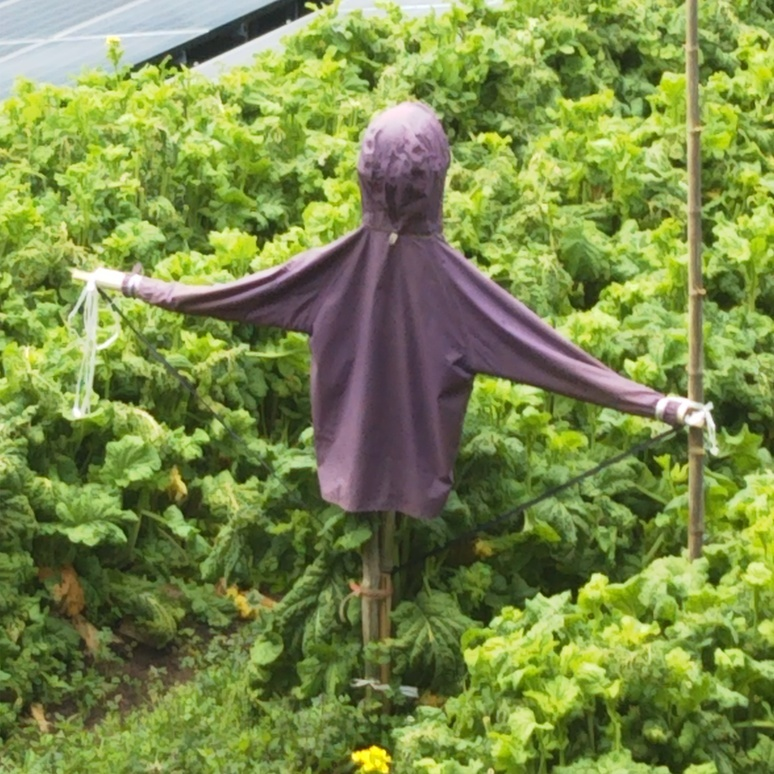scarecrow20170327.jpg