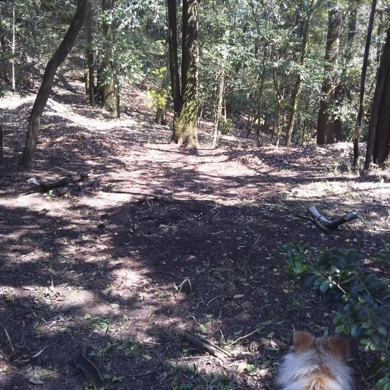 woods201703192.jpg