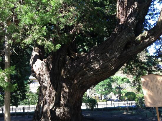 20181029鎌倉 建長寺の木