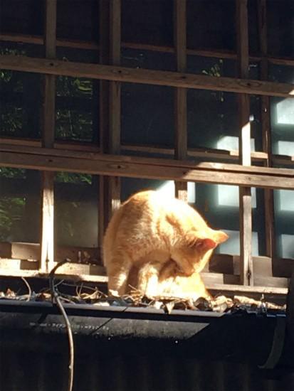 20181029 浄智寺の猫ちゃん