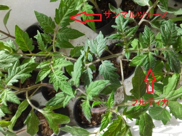 DSCF4044_1.jpg