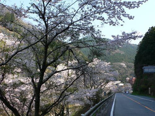 yoshinoyama290414001_R.jpg