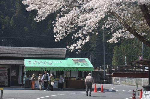 yoshinoyama290414005_R.jpg
