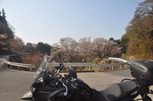 yoshinoyama290414007_R.jpg
