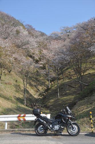 yoshinoyama290414009_R.jpg