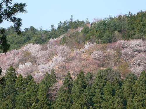 yoshinoyama290414022_R.jpg