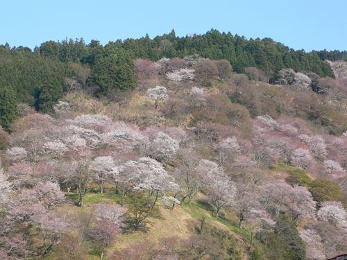 yoshinoyama290414023_R.jpg