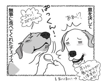 """羊の国のラブラドール絵日記シニア!!「ドラマ""""カッテージチーズと俺達""""」3"""