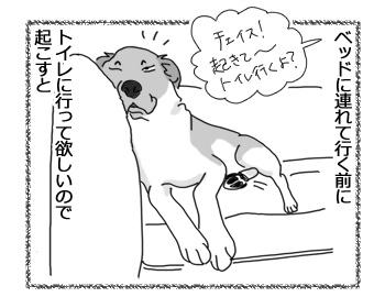06042017_dog2.jpg