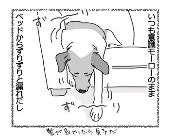 06042017_dog3.jpg