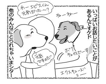 07032017_dog2.jpg