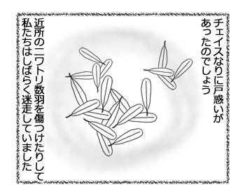 09032017_dog2.jpg