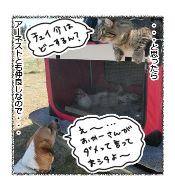 10032017_dog5.jpg