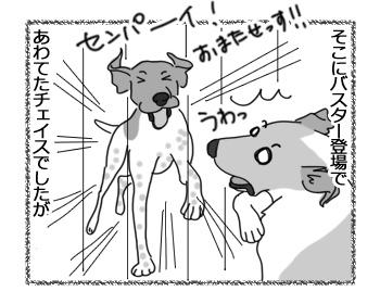 11042017_dog4.jpg