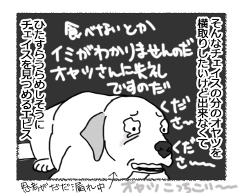 13032017_dog2.jpg