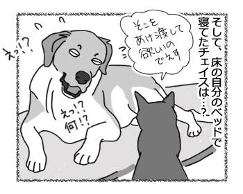 15032017_dog4.jpg