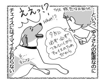 18042017_dog3.jpg