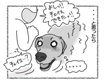 20022017_dog3.jpg