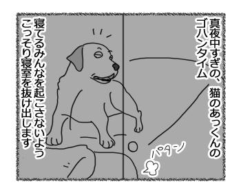 20032017_dog1.jpg