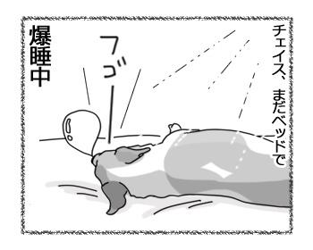21032017_dog4.jpg