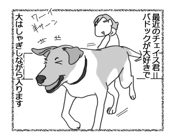 22022017_dog1.jpg
