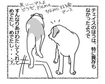 22032017_dog3.jpg