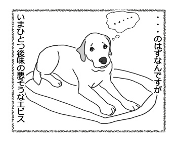 22032017_dog4.jpg