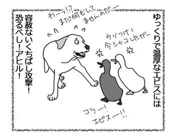 23022017_dog4.jpg