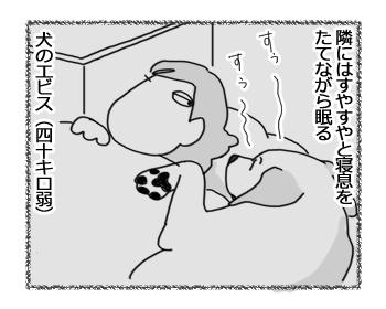 23032017_dog2.jpg