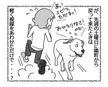 27022017_dog3.jpg