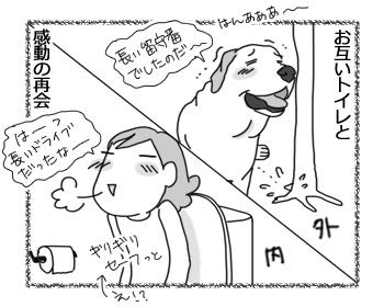 27022017_dog4.jpg