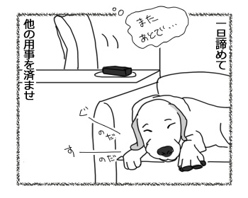 27032017_dog2.jpg