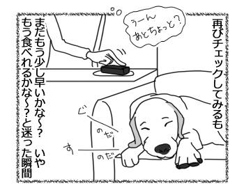 27032017_dog3.jpg