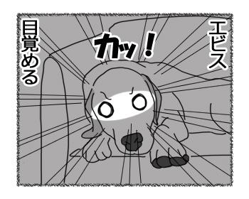 27032017_dog4.jpg
