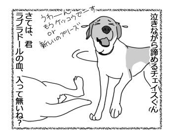 29032017_dog4.jpg