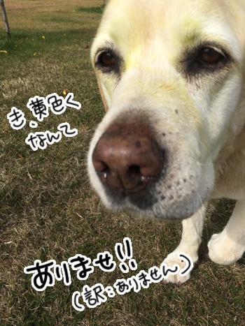 31032017_dog9.jpg