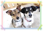 保護犬教育部