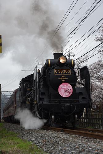 桜の秩父鉄道SL_01