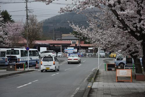 桜の秩父鉄道SL_02