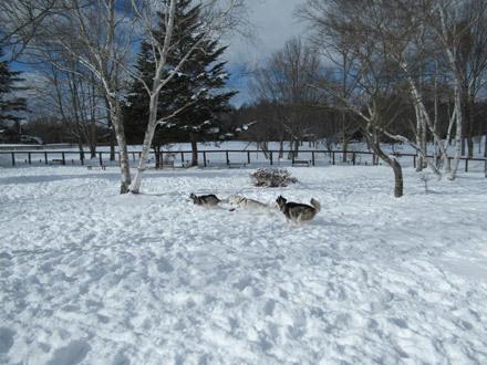 八ヶ岳で雪遊び