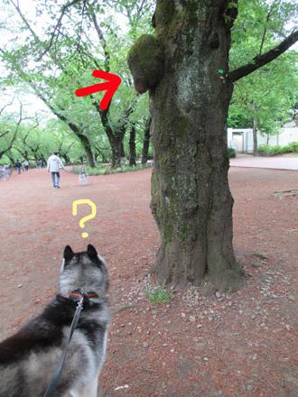井の頭公園観察散歩